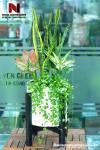 Cây Lưỡi Hổ Tiền Tài Chậu Đá Mài Trắng 30x30 cm