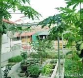 Cây Ăn Trái Được Trồng Ở Vườn Trên Sân Thượng