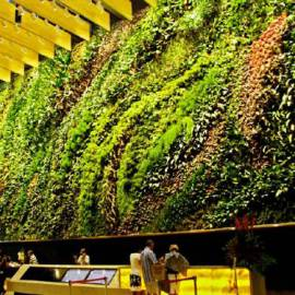Thi công vườn tường cây xanh thẳng đứng
