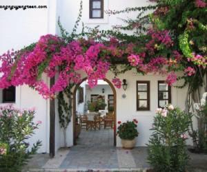 Cách thiết kế giàn hoa trước sân nhà đẹp