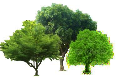 Dịch vụ bảo dưỡng chăm sóc cây xanh