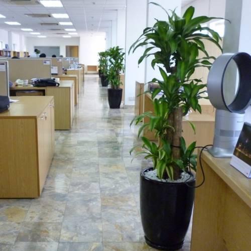 Dịch Vụ Cho Thuê Cây Cảnh, Cây Xanh Nội Thất Văn Phòng Tại HCM