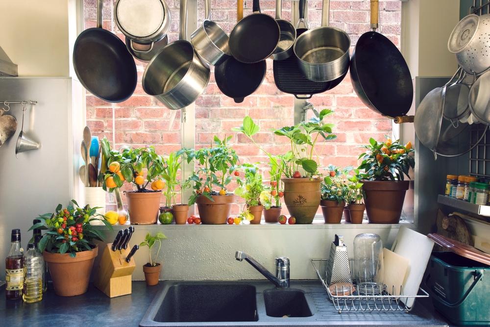 Bố trí cây cảnh trong nhà bếp