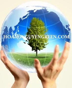 cây giúp bảo vệ tầng ozon