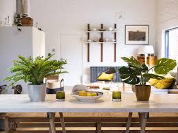 Cây dương xỉ trồng trong bếp