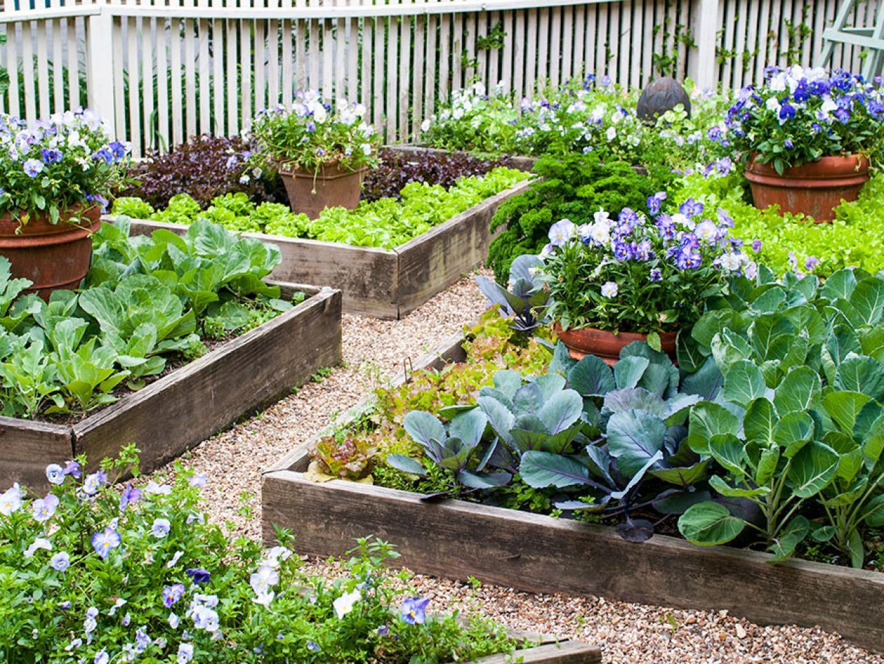 Cây trồng sân vườn