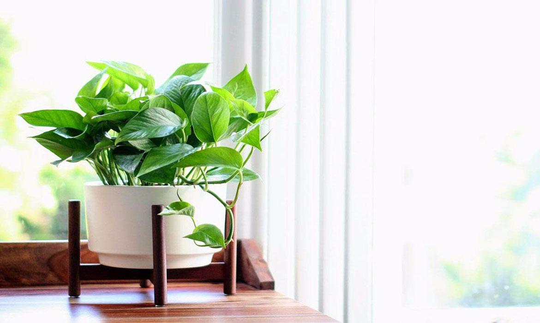 cây xanh phải đảm bảo tiêu chí về sức khỏe