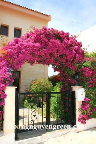 cổng hoa bông giấy