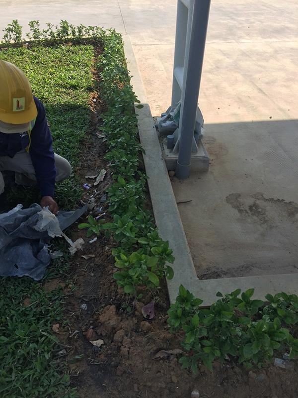 Dự án A&E_Hoàng Nguyên Green