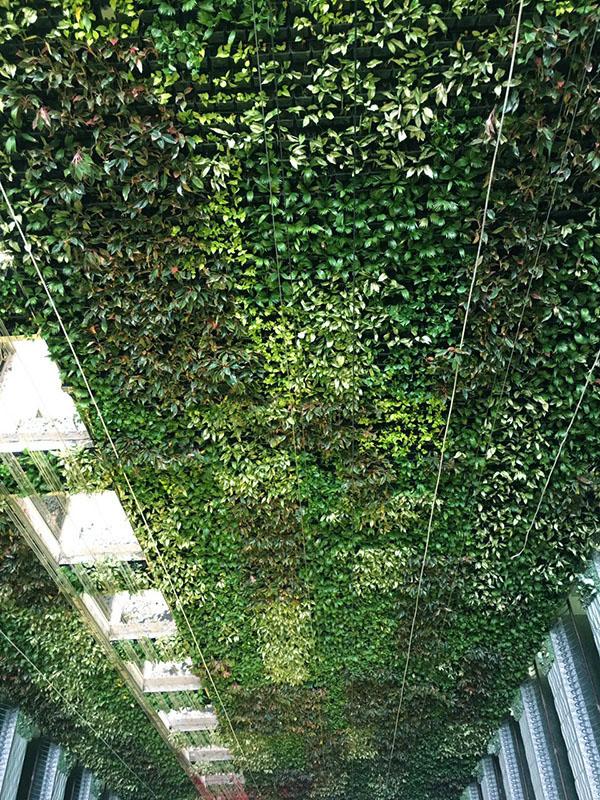 Tường xanh_Leman Luxury Apartments