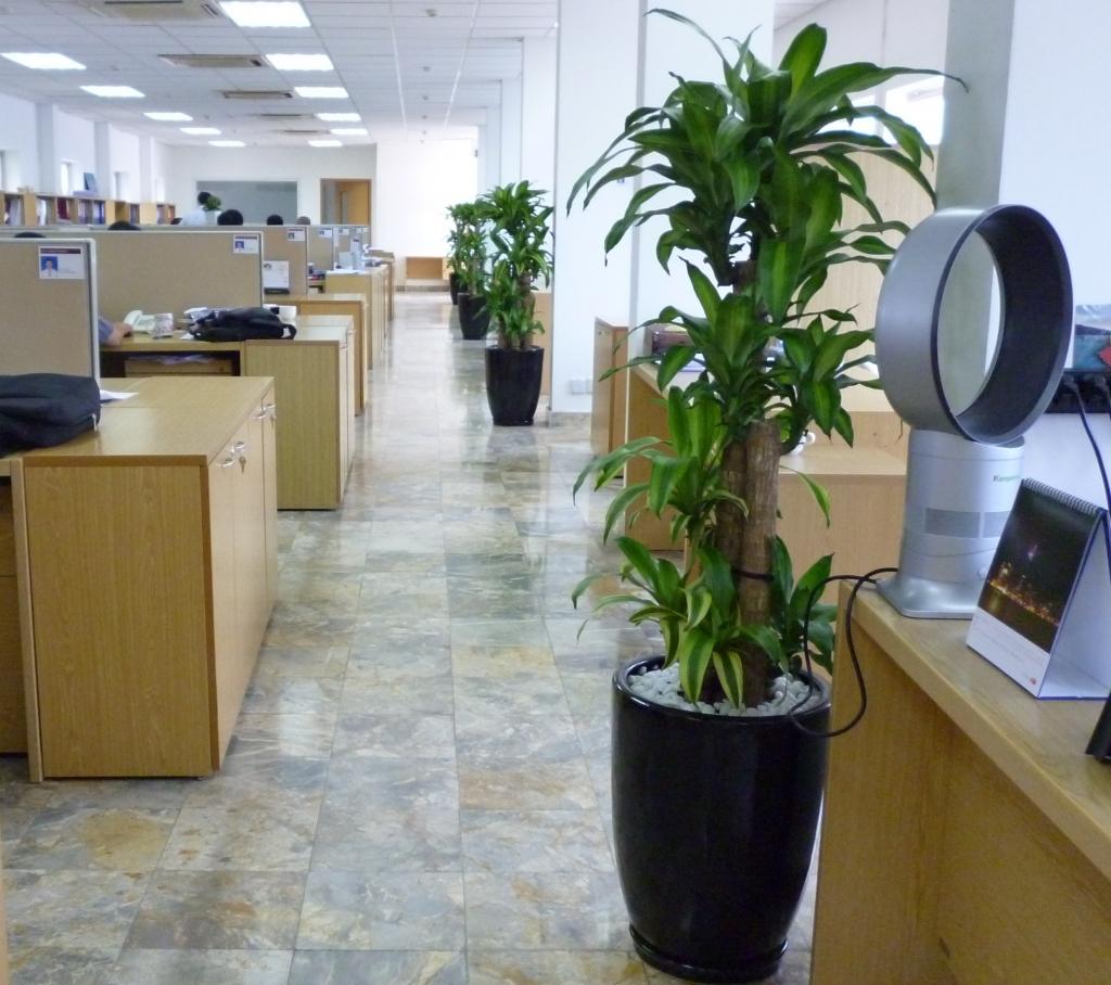 Phong thủy cây văn phòng