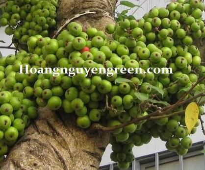 Hoangnguyengreen.com