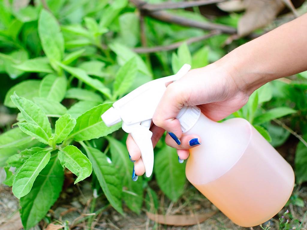 Cách pha phân bón lá và thuốc trừ sâu