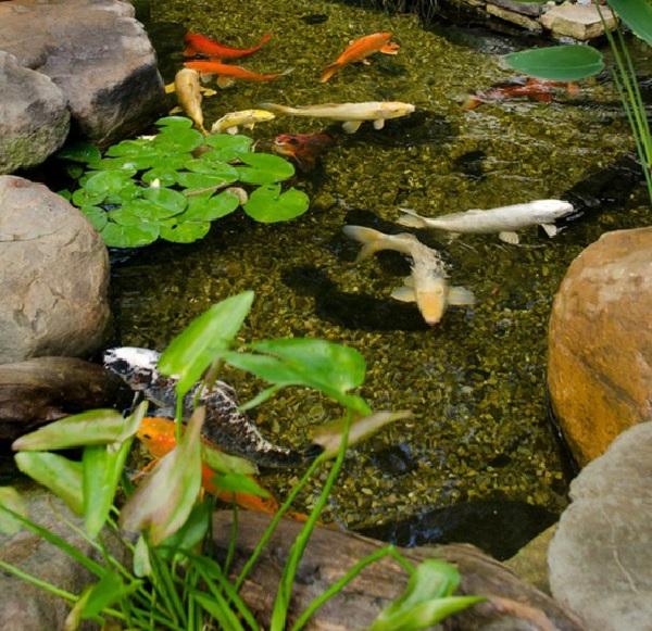 Trồng cây thủy sinh trong hồ cá