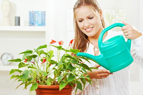 tưới nước cho cây