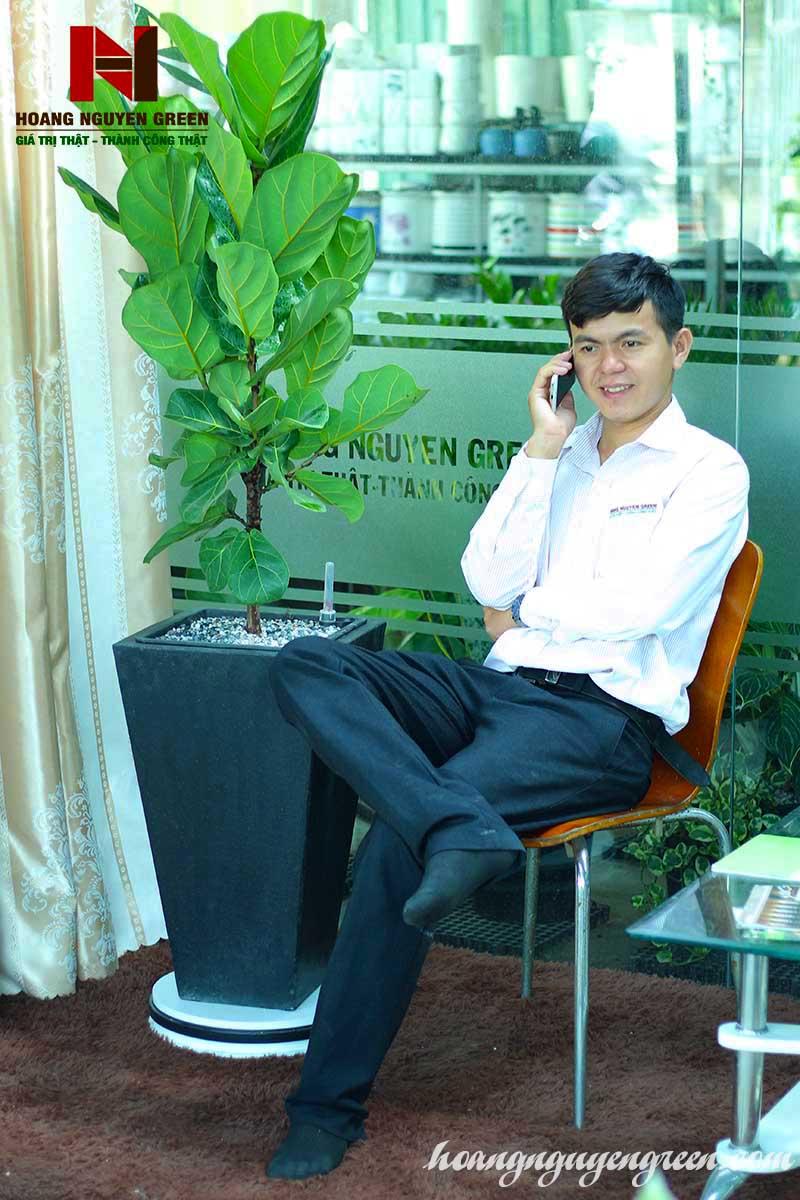 Cây Bàng Singapore Chậu Đá Mài Vuông Vát Đáy Đen